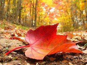 yoga en automne