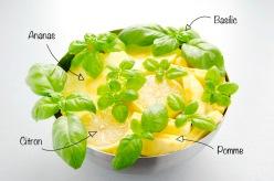 jus-ananas-pomme-citron-basilic-01.jpg